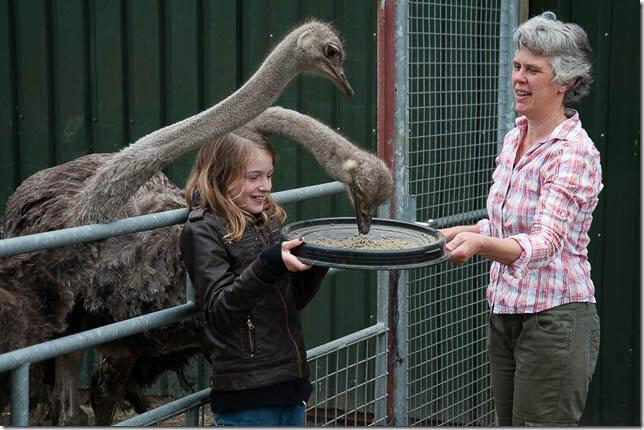 Boerakker Struisvogelboerderij-12