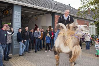 grijpskerk 50 jaar op kameel