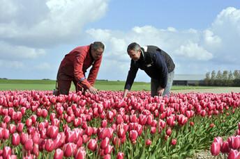 kruisweg tulpen velden 3