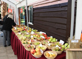 HARKEMA - fruitdag