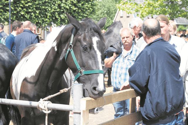 Eastermar - paardenmarkt 1