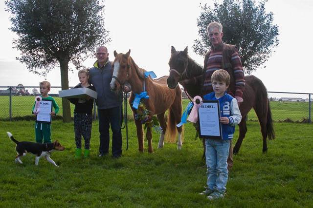 Grijpskerk - oude pony's